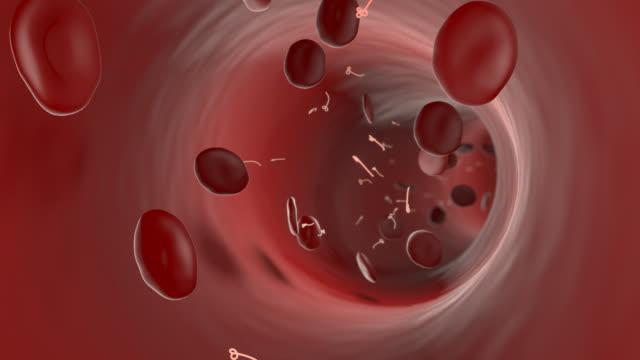 vídeos de stock e filmes b-roll de ébola vírus, através do sistema sanguíneo - glóbulo vermelho