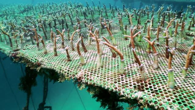 Öko-Tourismus-Projekt künstliche Riff Korallen Baumschule – Video