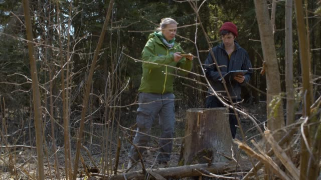 Eco volunteers shooting sawn tree