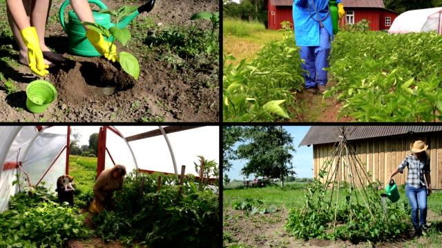 vídeos de stock e filmes b-roll de ecologic jardinagem no espaço rural agrícola. clips de vídeo colagem. - lata comida gato