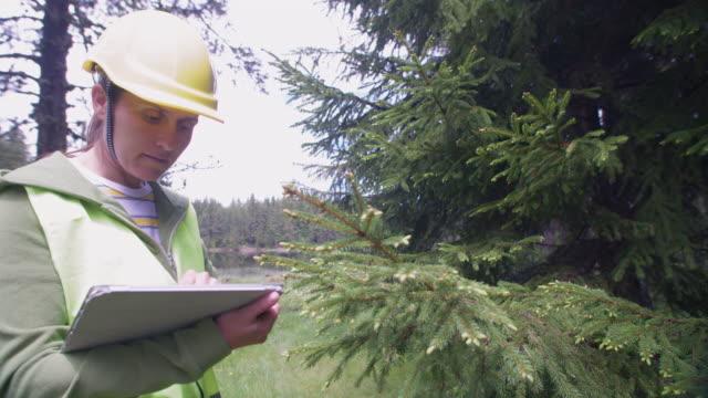 ecologisti sul campo. esaminare le condizioni naturali della foresta e prelevare campioni per ricerche più approfondite. - botanica video stock e b–roll