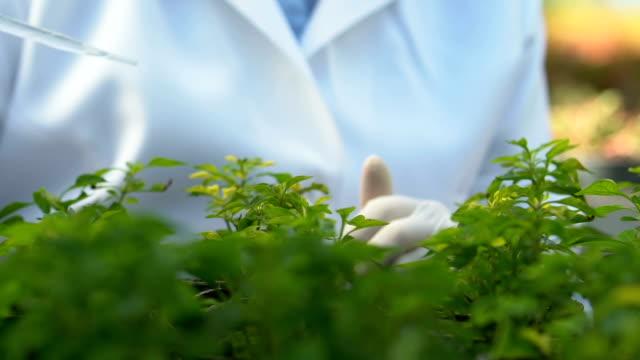 ecology expert dripping fertilizer liquid analyzing growing plants conditions - expert стоковые видео и кадры b-roll