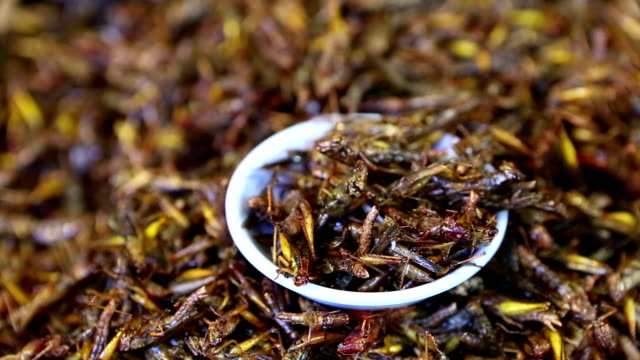 Edible Insect Food Thai Cuisine Thailand video