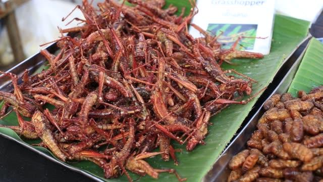 essbare gebratene und gewürzte mahlzeit grasshopper. fehler gebraten auf street food, thailand - grashüpfer stock-videos und b-roll-filmmaterial