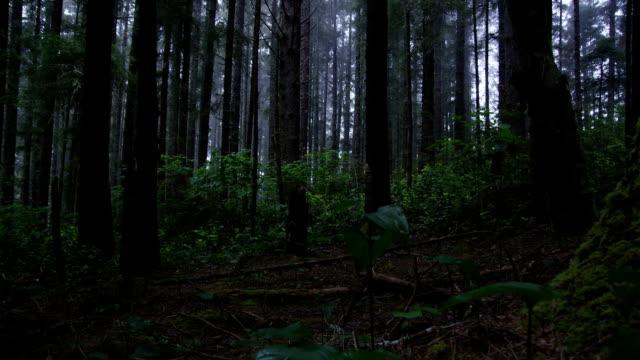inquietanti nebbia coperte da una fitta vegetazione di foresta. - yeti video stock e b–roll