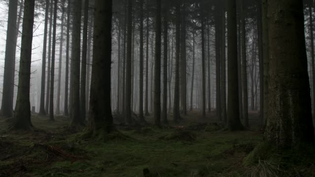eerie forest - trees in mist stock videos & royalty-free footage