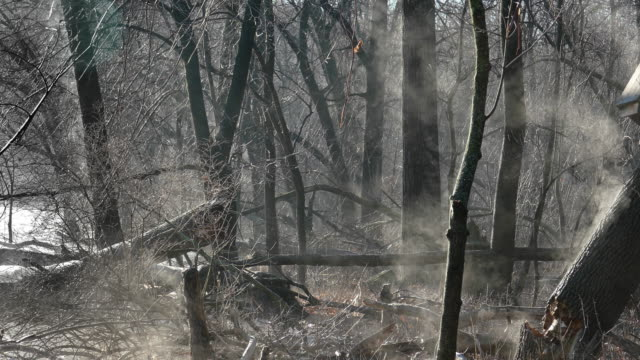 Eerie steaming forest at dawn with broken tree, birdhouse video