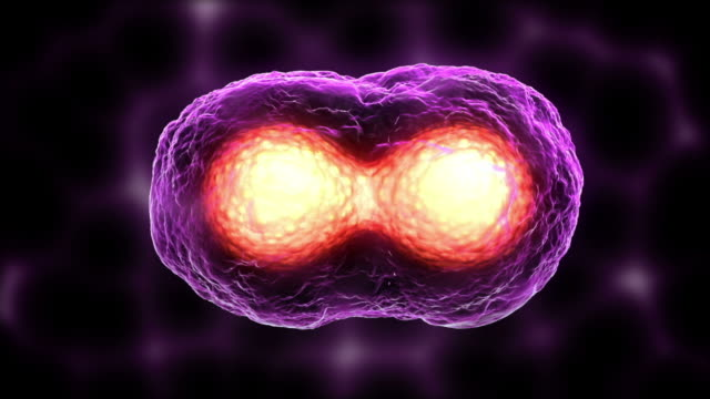 Egg Cell Mitosis Purple video