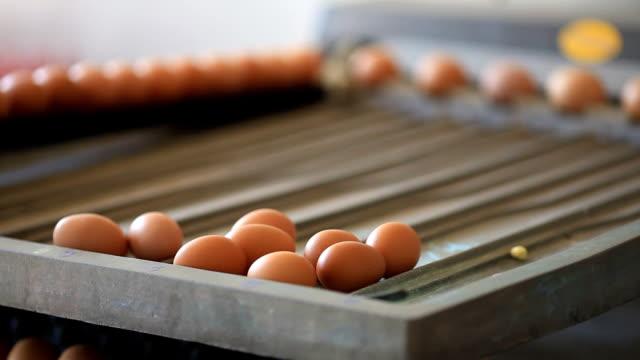 Egg farm industrial packaging video