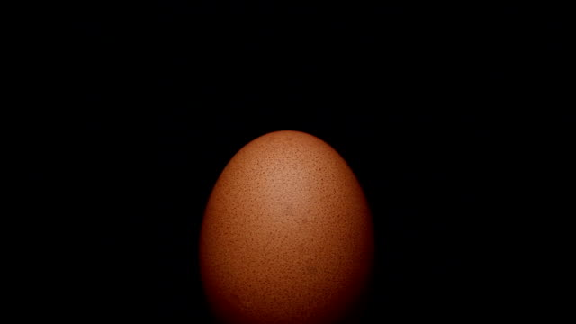 Egg rotating on isolated black video