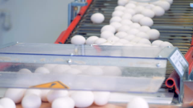 Eggs transportation process downwards the conveyor belt at a poultry. Poultry farm industrial production line.