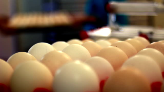 stockvideo's en b-roll-footage met eggs - chicken bird in box