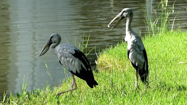 池のそばの白鷺 - 水鳥点の映像素材/bロール