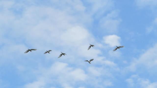 백로 푸른 하늘, 슬로우 모션에에서 비행입니다. - 하늘을 나는 새 스톡 비디오 및 b-롤 화면