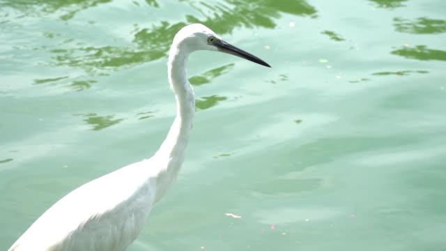Egrets bird