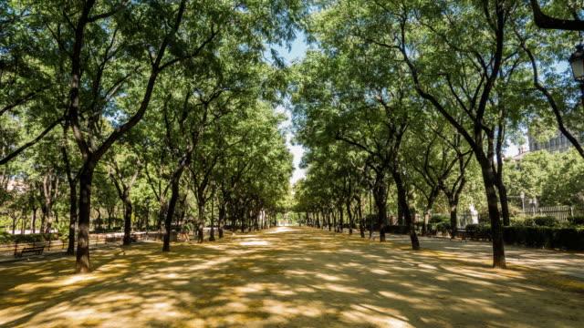 el parque del prado de sevilla timelapse con sahdows en movimiento en el piso y amarillo las flores en el piso - vídeo