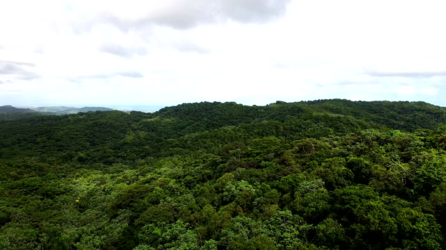 El Yunque National Forest Puerto Rico El Yunque National Forest Puerto Rico puerto rico stock videos & royalty-free footage