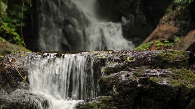 vidéos et rushes de chutes d'elabana-vidéo 4k de cascade rainforest dans le parc national de lamington australie - coquillage