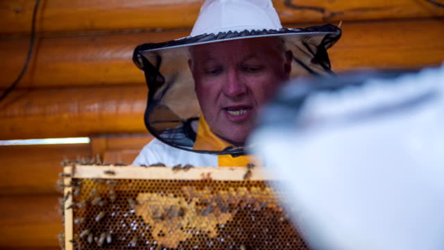 stockvideo's en b-roll-footage met elderly bee-keeper thatching the child about the bee-keeping - beemster