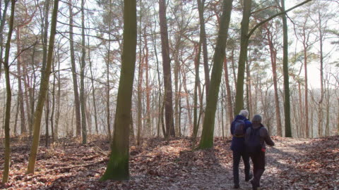 Elderly couple hiking in woodland during winter Rear view of senior couple talking while walking in woodland. Lockdown shot of elderly backpackers are exploring forest. They are spending leisure time together. carefree stock videos & royalty-free footage