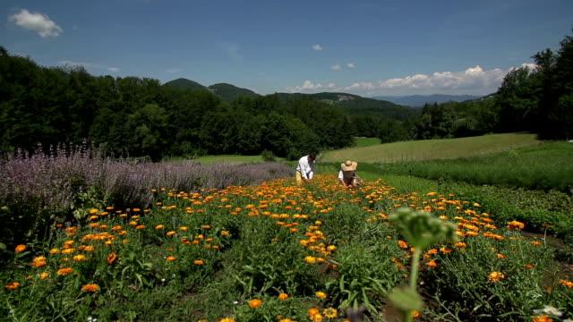 coppia di anziani nel centro di fiori di campo - fare video stock e b–roll