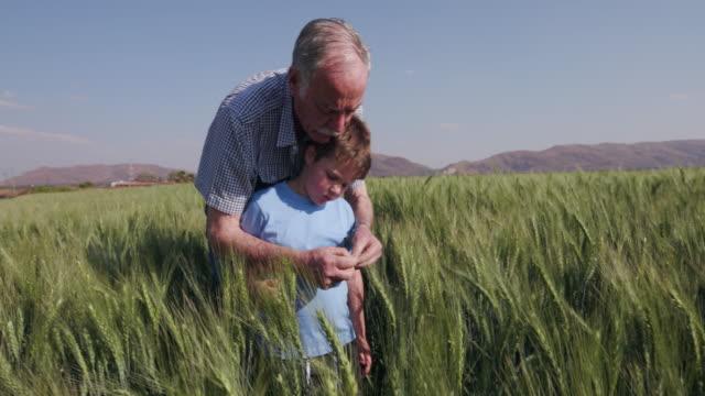 Elderly farmer and grandson walking through wheat fields video
