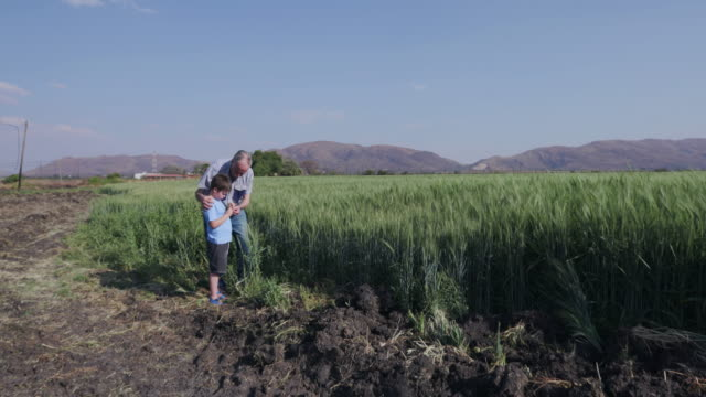 Elderly farmer and grandson walking through wheat fields Elderly farmer and grandson walking throught wheat fields and inspecting the crop one boy only stock videos & royalty-free footage