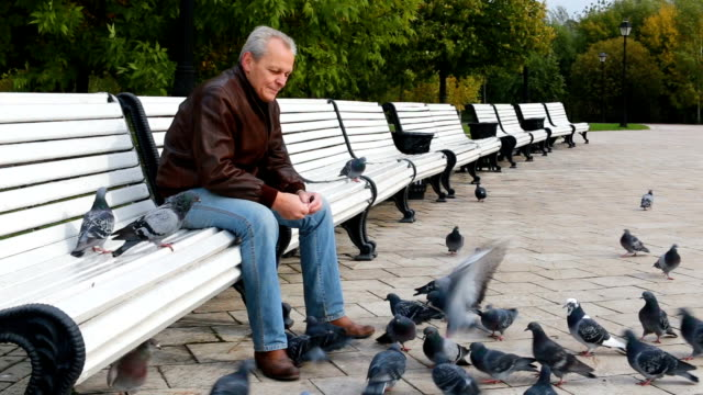 elderly man in the park feeding pigeons - colombaccio video stock e b–roll