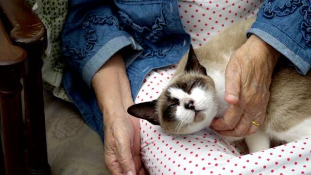 Elderly woman holding a cat - video