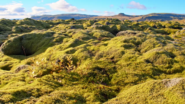 ds eldhraun lava field in iceland - moss stock videos & royalty-free footage