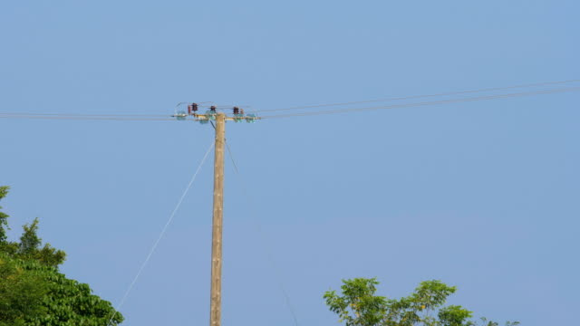 Electric pole in wild video