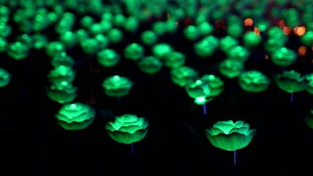 electric roses shining in the dark night - colore saturo video stock e b–roll