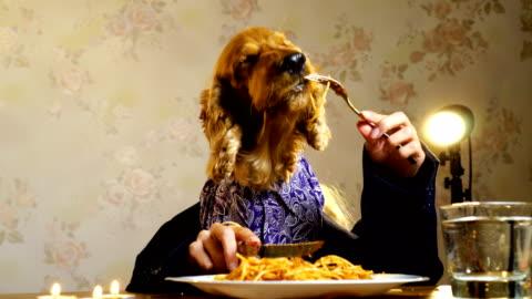 vidéos et rushes de chien élégant, manger avec les mains humaines - manger