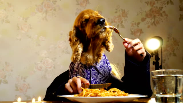 Elegant dog eating with human hands Formal wear dog eating spaghetti with human hands. snack stock videos & royalty-free footage