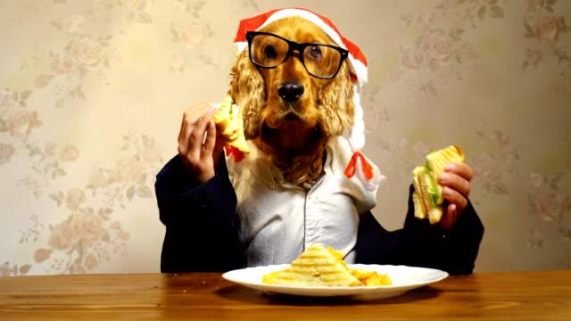 エレガントな犬が人間の手で食べて ビデオ