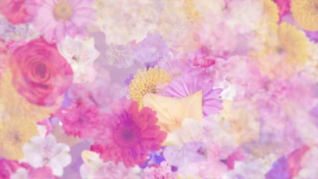 vídeos de stock, filmes e b-roll de fundo floral elegante com várias flores - estampa floral