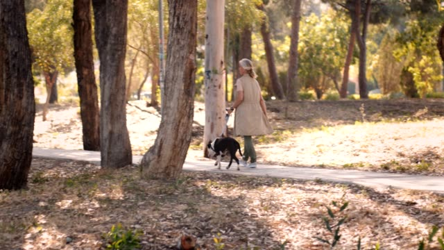 Elegant mature woman walking dog in park in autumn Happy senior woman relaxing on morning walk with dog in the forest leash stock videos & royalty-free footage