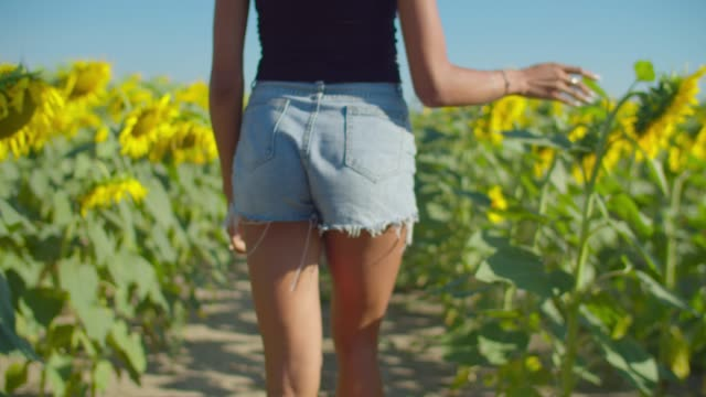 Elegant woman walking in blossoming sunflower field