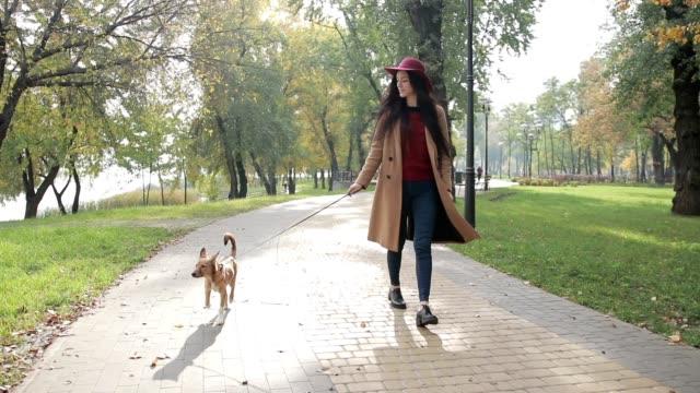 eleganta kvinnan promenader med hund i höst park - elegans bildbanksvideor och videomaterial från bakom kulisserna