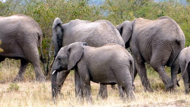 Elephant at Wild