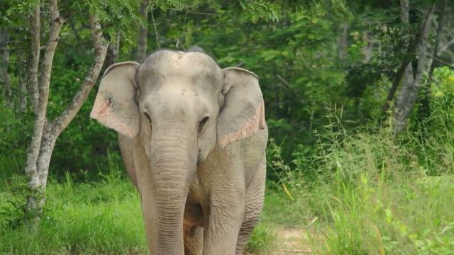 Elephant Entered video