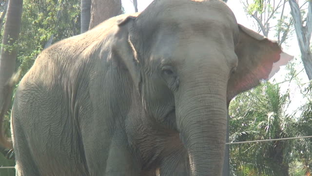 (hd1080i) elephant face in hazy sunshine - {{searchview.contributor.websiteurl}} stock videos & royalty-free footage
