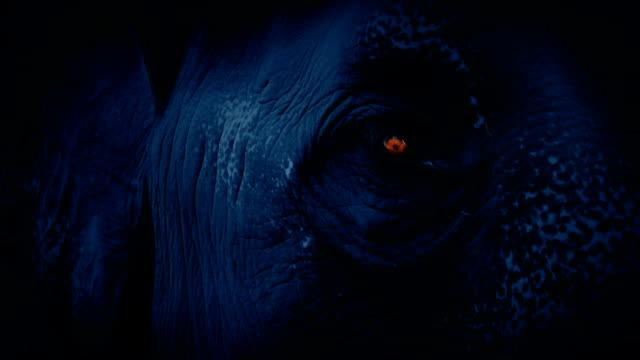 stockvideo's en b-roll-footage met olifant gezicht met oog gloeien in het donker - dierenhuid huid