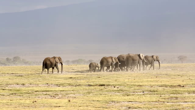 Elephant Family at Amboseli video