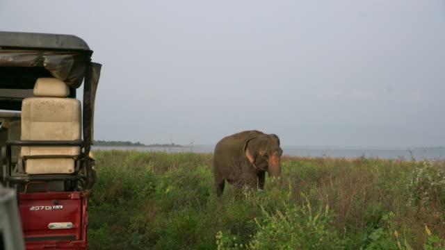 MS Elephant grazing near safari vehicle,Sri Lanka