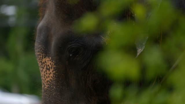 vídeos de stock, filmes e b-roll de elefante na tailândia ayuthaya. - cultura tailandesa