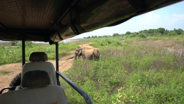 MS Elephant in sunny field behind safari vehicle,Sri Lanka