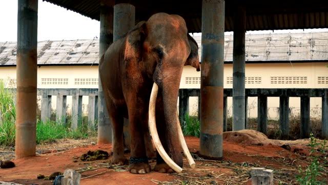 vídeos de stock e filmes b-roll de elephant in the zoo - proteção