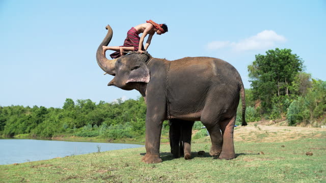 Elephant lifting mahout by there trunk while taking a bath near the river. video