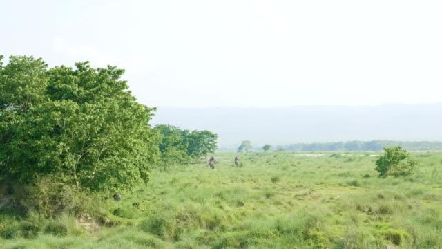 elephant safari med turister i djungeln, national park i chaitwan, nepal. - india statue bildbanksvideor och videomaterial från bakom kulisserna
